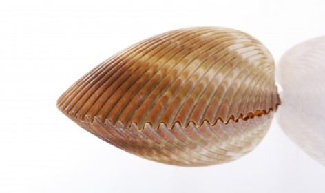 stockvault-seashell-126894