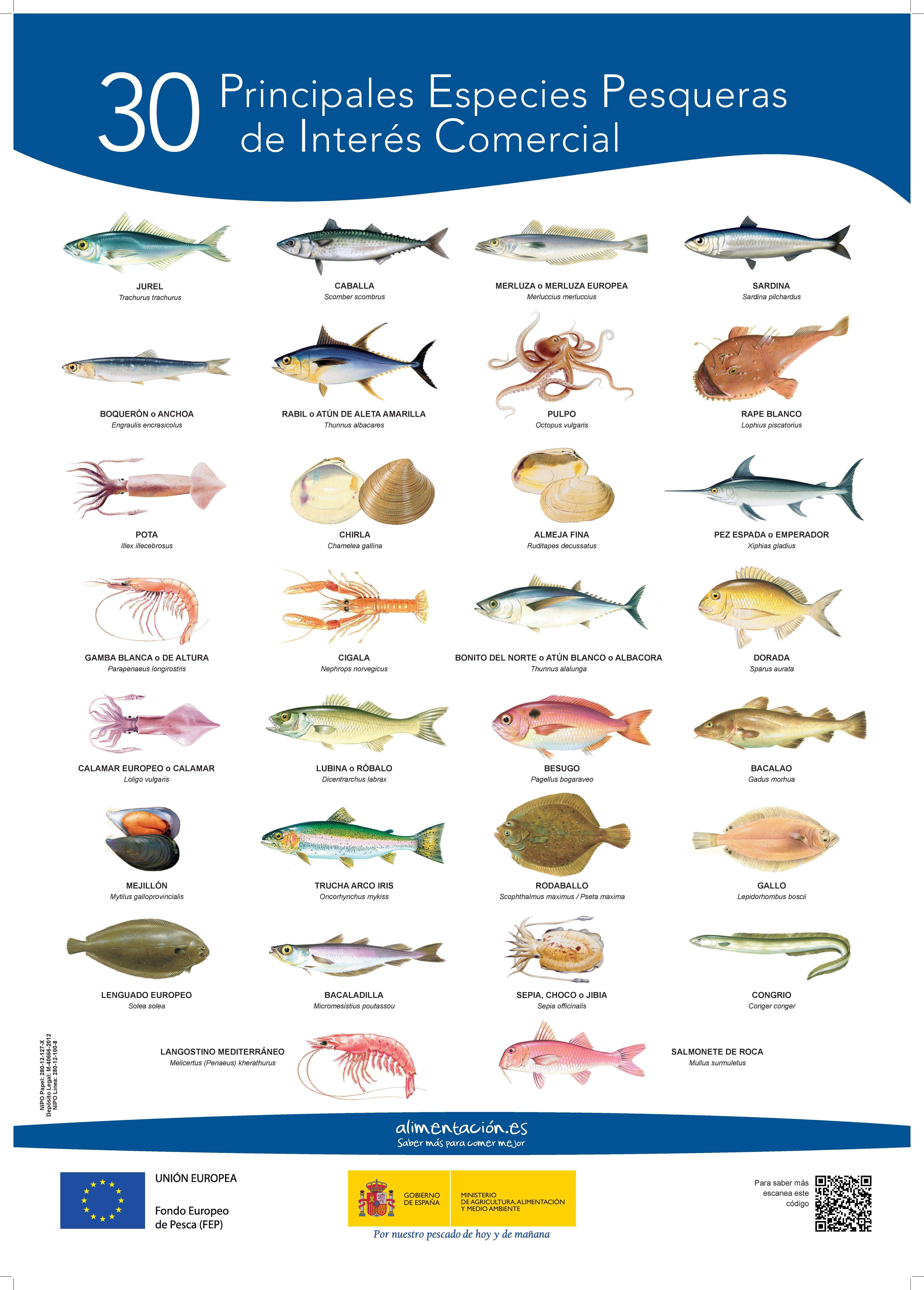 Cartel 30_principales_especies_48x68 _tcm5-50327-page-001